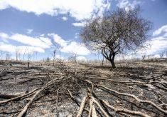 Por que pesquisadores estrangeiros estão preocupados com a conservação ambiental no Brasil?