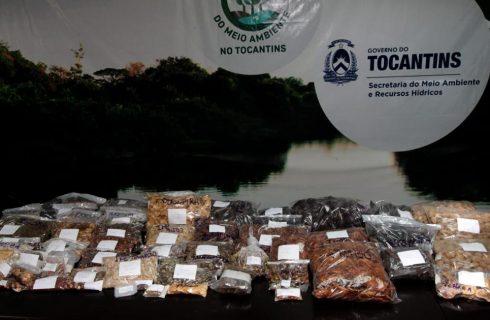 Viveiro recebe mais de 100 kg de sementes coletadas pelos Comitês de Bacia para recuperação de nascentes