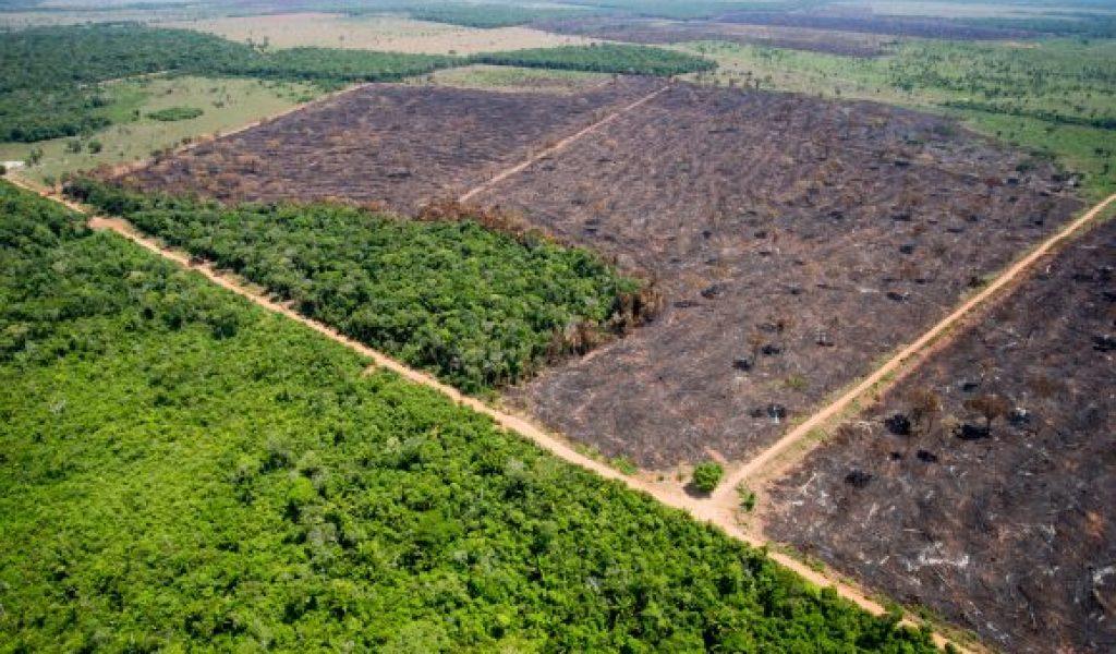 Desmatamento na Amazônia caiu 16% no último ano, diz ministro do Meio Ambiente