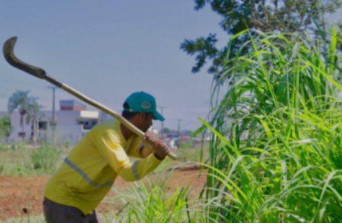 Proprietários de terrenos e lotes em Gurupi tem até 10 de junho para a limpeza dos imóveis