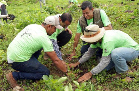 Governo do Estado inicia o plantio de mudas no Parque Estadual do Lajeado em parceria com a ONG 8 Billion Trees
