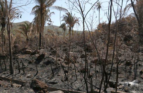Governo promove campanha educativa em escolas para combater queimadas no Tocantins