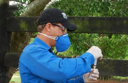 Médico veterinário da iniciativa privada deve recadastrar na Adapec para realizar vacinação contra brucelose