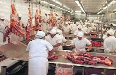 Três são presos suspeitos de furtar gado e falsificar notas para vender carne a frigoríficos
