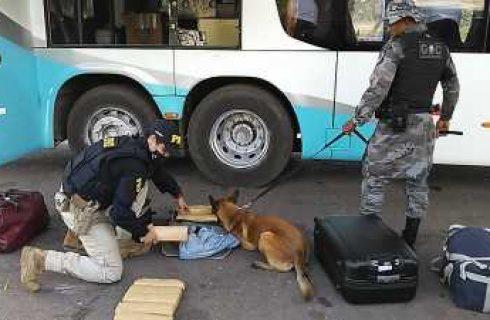 Cão farejador da Polícia Militar localiza cerca de 15 kg de entorpecentes em Operação Conjunta com a PRF em Guaraí