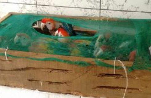 PF investiga organização criminosa suspeita de caçar e vender animais silvestres